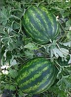 Семена арбуза Мисон F1 5 шт