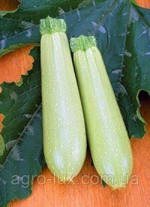 Семена кабачка Искандер F1 10 шт