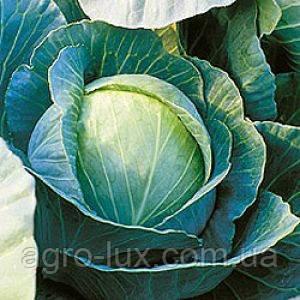 Семена капусты б/к средней Куизор F1 100 шт