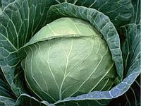 Семена капусты б/к средней Пруктор F1 20 шт