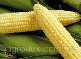 Семена кукурузы Спирит F1 100 шт