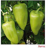 Семена перца Сенатор F1 5 г (750-900 с), Solar Sementi