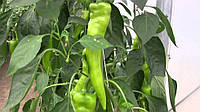 Семена перца ШакираF1 500 шт