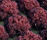 Салат листовой Кармеси 1000 драже