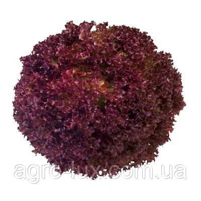 Семена салата (тип Лолла Росса) Конкорд 1000 драже Rijk Zwaan / Рийк Цваан