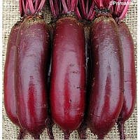 Семена свеклы Карилон PR 25 000 штук Rijk Zwaan / Рийк Цваан