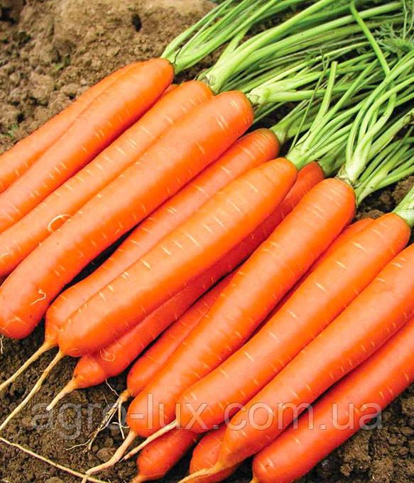 Семена моркови Белградо F1 (1,8-2,0мм)1 млн шт Bejo / БЕЙО