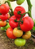 Семена красного томата Абелус F1 1000 шт Rijk Zwaan / Рийк Цваан