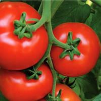 Семена красного томата Аламина  F1, 1000 штук Rijk Zwaan / Рийк Цваан