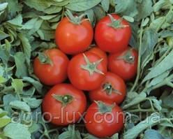 Семена красного томата Топспорт F1 5 г Bejo / БЕЙО