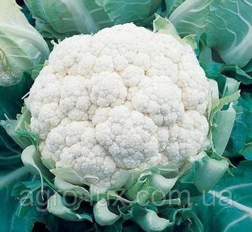 Семена цветной капусты Фарго F1 2500 шт Bejo / БЕЙО