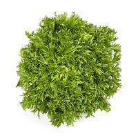 Семена салата эндивий Корби 1000 драже Rijk Zwaan / Рийк Цваан