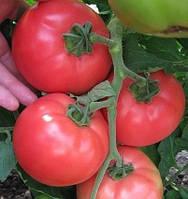 Акция! Семена розового томата VP-1 (ВП 1) F1 1000 шт Hazera / Хазера