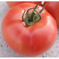 Семена томата розового  VP-2 (ВП 2)  F1 1000 шт Hazera / Хазера