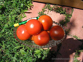 Семена томата Кристал F1 1г Clause / Клоз