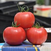 Семена томата Пинк Клер F1 500 шт