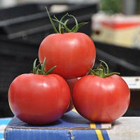 Семена томата Пинк Клер F1 500 шт Hazera / Хазера