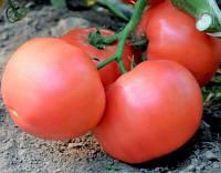 Семена томата Эсмира F1 розового 1 000 с Rijk Zwaan / Рийк Цваан
