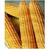 Семена кукурузы Димакс F1 (Танем F1) 0,5 кг. MaySeed.