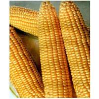 Семена кукурузы Димакс F1 (Танем F1) 5 кг. MaySeed.