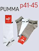Чоловічі шкарпетки SPORT бавовна « PUMA »