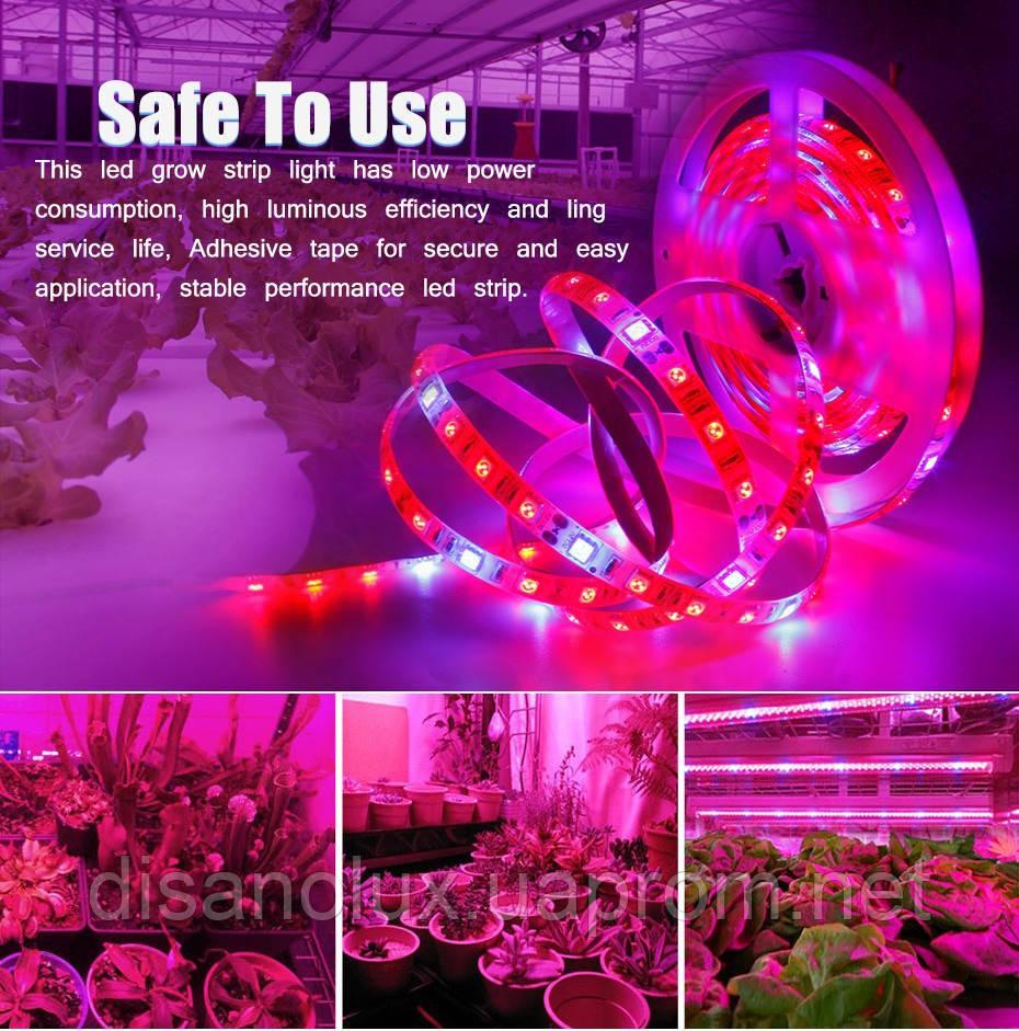 Фитолента для растений 3red +1blue SMD 5050  300Led 60шт/м  12в  IP65  5м