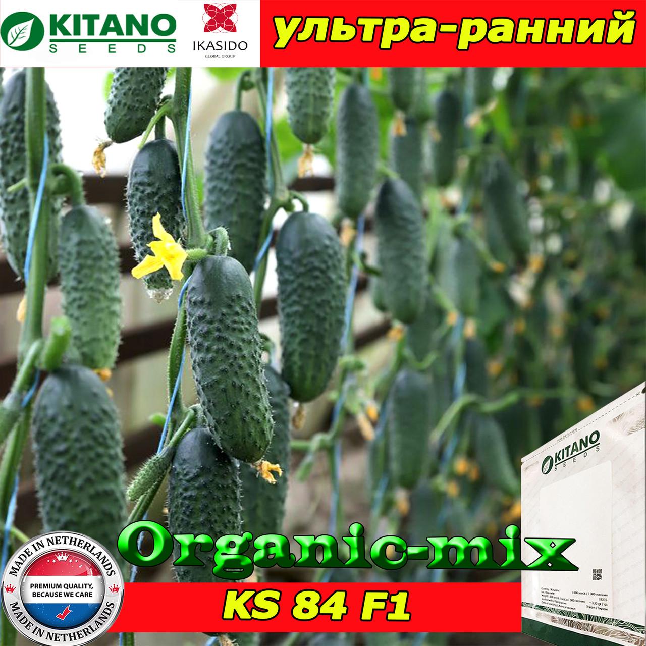 Семена, огурец ультра ранний КС 84 F1 / KS 84 F1, суперпучковой, 250 семян, ТМ Kitano Seeds
