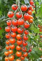 Семена томата Коти F1 RN 1000 сем. MaySeed.