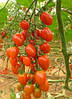 Семена томата Плумер F1 100 сем. MaySeed.