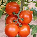 Нада F1 семена высокорослого томата Esasem Италия 250 шт, фото 2