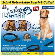 Поводок для собак регулируемый Lucky Leash 2 в 1 ошейник