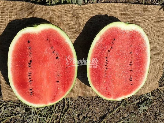 Семена арбуза Эпика F1 (1000 сем.) Clause