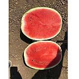 Семена арбуза Эпика F1 (1000 сем.) Clause, фото 3