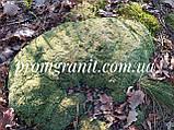 Мох натуральный лесной, фото 2