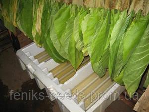 Семена Табак Берли