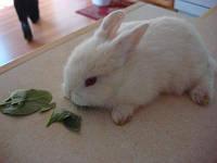 МИНИ Кролики разного окраса-малыши ручные.