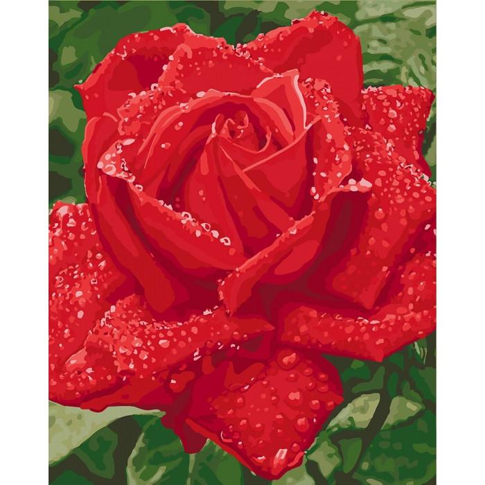 Картина по номерам Нежность розы ТМ Идейка 40 х 50 см КНО3045