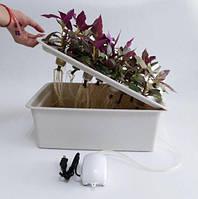 Гроубокс гідропоніка для вирощування зелені