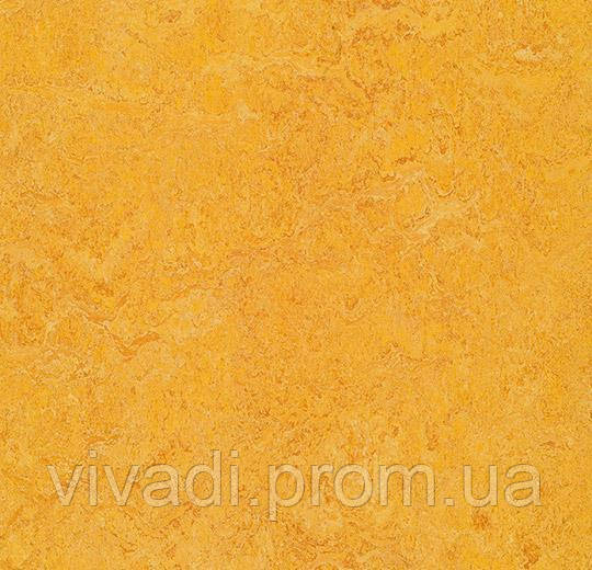 Акустичний натуральний Marmoleum-dandelion
