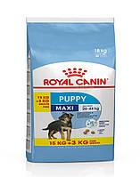 Сухой корм Royal Canin Maxi Puppy для щенков крупных пород до 15 месяцев,15 кг.