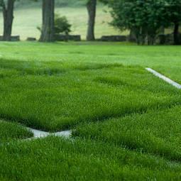 Подготовка газона на зиму. Как это сделать правильно?