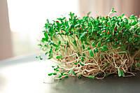 микрогрин ЛЮЦЕРНЫ  микрозелень органические Sadovе  50 г, фото 1