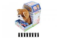 Інтерактивна собака Corgi (коробка) L0553 (шт.)