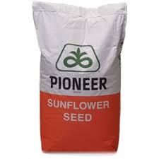 Семена подсолнечника П64ЛЛ125 (P64LL125) Пионер (Pioneer)