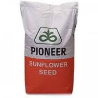 Семена подсолнечника ПР64Ф66 (PR64F66) Пионер (Pioner)