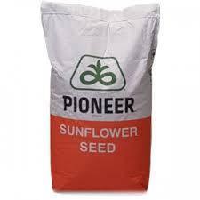 Насіння соняшнику P64LE121 Піонер (Pioneer)