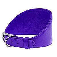 Ошейник WAUDOG Glamour для борзых собак, без украшений, фиолетовый