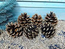 Шишки натуральні 6-6,5 см, набір 6шт