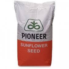 Насіння соняшнику P64HH123 Піонер (Pioneer)