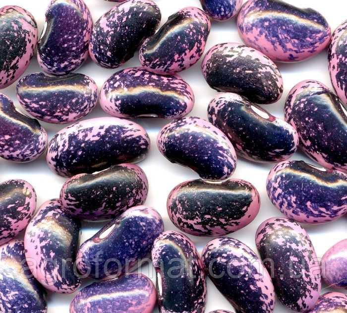 Фасоль Бандоля Фиолетовая (квасоля) от 1кг